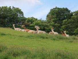 The Cabin, Lowley Brook Farm - Cornwall - 1076711 - thumbnail photo 10