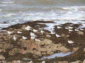 Harbour View - Scottish Lowlands - 1077375 - thumbnail photo 21