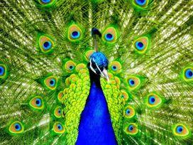 The Cosy Peacock - Lake District - 1078122 - thumbnail photo 26