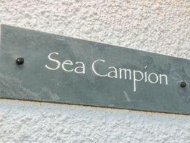 Sea Campion - Devon - 1079396 - thumbnail photo 3