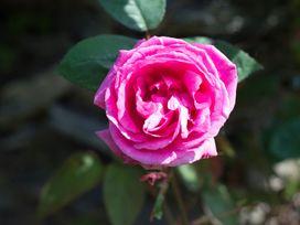 Porthilly Greys - Cornwall - 1080235 - thumbnail photo 22