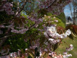 Sunnynook - Cornwall - 1080252 - thumbnail photo 23