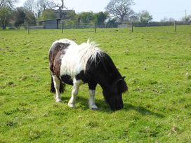 2 The Stables - Isle of Wight & Hampshire - 12934 - thumbnail photo 22