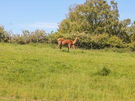 Deer Croft Cottage - Peak District - 13048 - thumbnail photo 12