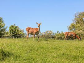 Deer Croft Cottage - Peak District - 13048 - thumbnail photo 13