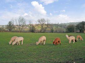 Spinney Farm Cottage - Peak District - 13102 - thumbnail photo 10