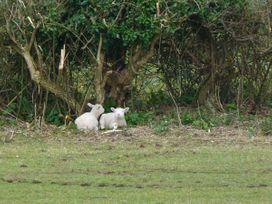 Stonewind Farm - Isle of Wight & Hampshire - 23533 - thumbnail photo 10