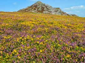 Foxglove - South Wales - 26360 - thumbnail photo 20