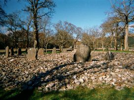 Crann Teile (Lime Tree) - Scottish Highlands - 26551 - thumbnail photo 20