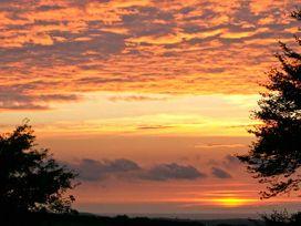 Foxglove - Cornwall - 29356 - thumbnail photo 8