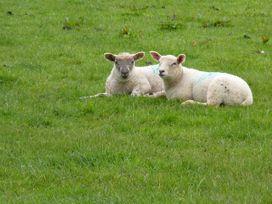 Groves Fishleigh - Devon - 31052 - thumbnail photo 9