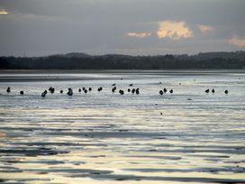 Hen Felin Isaf - Anglesey - 3938 - thumbnail photo 22