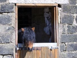 Stables Cottage - Yorkshire Dales - 3964 - thumbnail photo 11