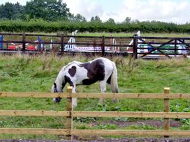 Betty's Barn - Shropshire - 4139 - thumbnail photo 10