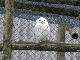 Betty's Barn - Shropshire - 4139 - thumbnail photo 11