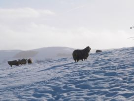 Wynnville - Yorkshire Dales - 4240 - thumbnail photo 21