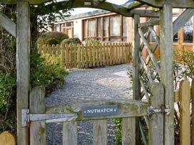 Nuthatch - Lake District - 4560 - thumbnail photo 11