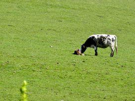 Penty - North Wales - 6881 - thumbnail photo 10