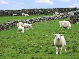 Caerffynnon - North Wales - 8566 - thumbnail photo 33