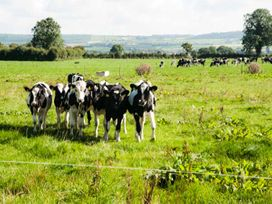 Cherryfield - East Ireland - 904441 - thumbnail photo 28