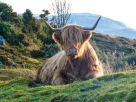 Balnabodach - Scottish Highlands - 906764 - thumbnail photo 12