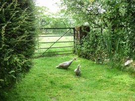 Winsor Cottage - South Wales - 914184 - thumbnail photo 11