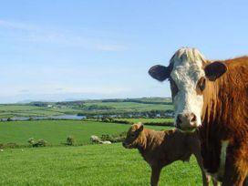 Fferam Y Llyn - Anglesey - 922967 - thumbnail photo 34