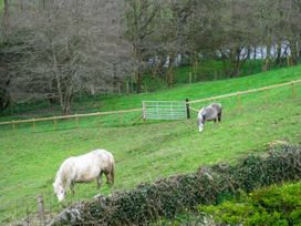 Little Cow House - Shropshire - 929056 - thumbnail photo 33