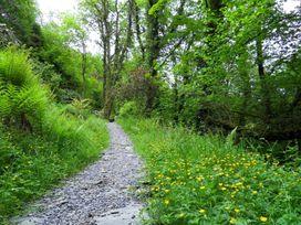 Kingfisher - South Wales - 930698 - thumbnail photo 33