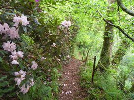 Kingfisher - South Wales - 930698 - thumbnail photo 40