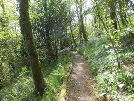 Kingfisher - South Wales - 930698 - thumbnail photo 27