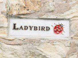 Ladybird - Peak District - 934393 - thumbnail photo 2