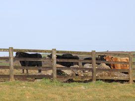 Foxes - Cornwall - 936311 - thumbnail photo 20