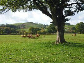 Tynddol Barn - Mid Wales - 940203 - thumbnail photo 32