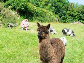 Fuschia Cottage - Cornwall - 942625 - thumbnail photo 11