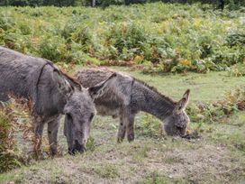 1 Bury Farm Cottage - South Coast England - 945151 - thumbnail photo 29