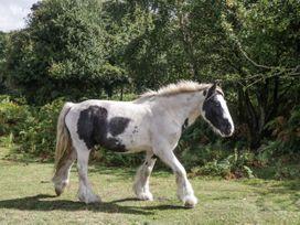 1 Bury Farm Cottage - South Coast England - 945151 - thumbnail photo 30
