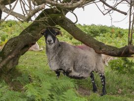 Flora's Barn - Somerset & Wiltshire - 947351 - thumbnail photo 37