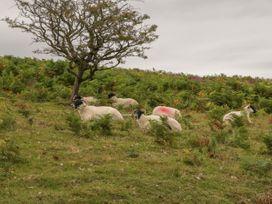 Flora's Barn - Somerset & Wiltshire - 947351 - thumbnail photo 38
