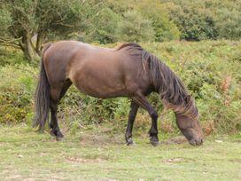 Flora's Barn - Somerset & Wiltshire - 947351 - thumbnail photo 41