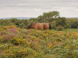 Flora's Barn - Somerset & Wiltshire - 947351 - thumbnail photo 42