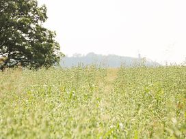 The Old Farmhouse - Shropshire - 947385 - thumbnail photo 29