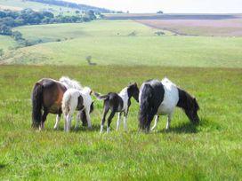 Blaendyffryn Fach - South Wales - 947942 - thumbnail photo 13