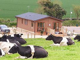 Whitey Top Lodge - Dorset - 948951 - thumbnail photo 3