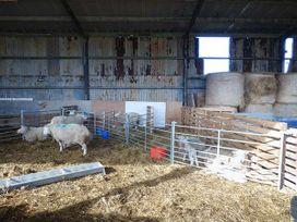 Bran Goesgoch - Anglesey - 950567 - thumbnail photo 15