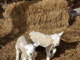 Bran Goesgoch - Anglesey - 950567 - thumbnail photo 16