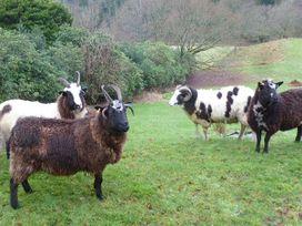 T'whit T'woo - Lake District - 951561 - thumbnail photo 18