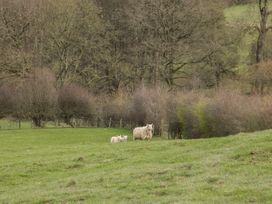 Larchwood Cottage - Mid Wales - 952340 - thumbnail photo 30