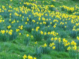 The Granary - Herefordshire - 952949 - thumbnail photo 11