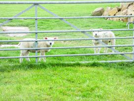 Willow Cottage - Yorkshire Dales - 954745 - thumbnail photo 9